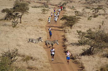 Safaricom Marathon Zebra on Course